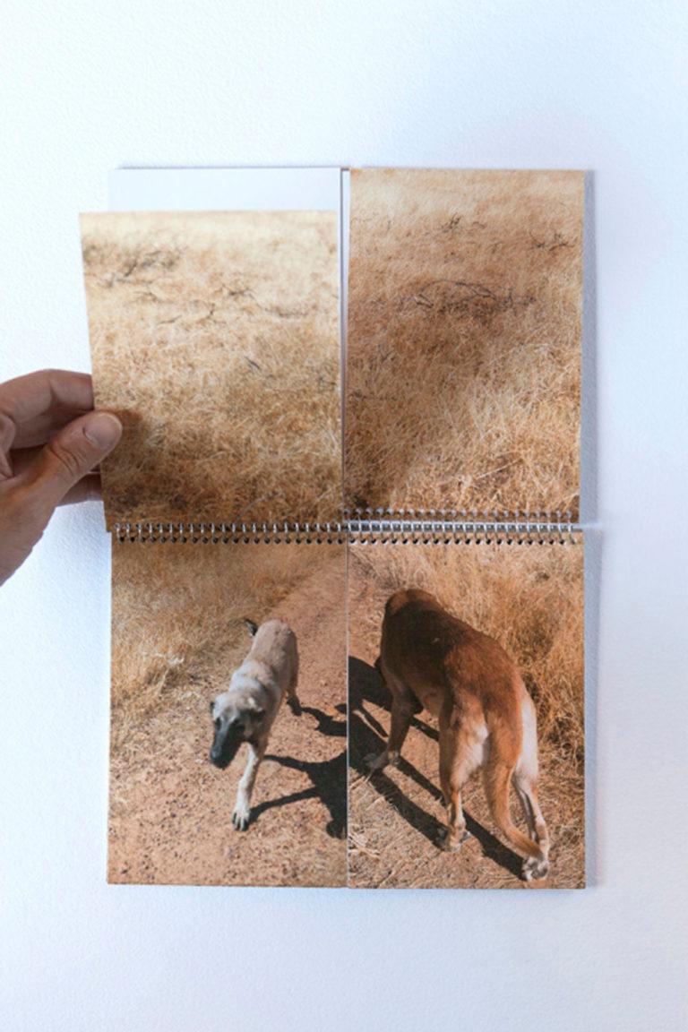 El paseo de los perros 08
